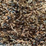 Vloerkleed Revan beige/bruin 17