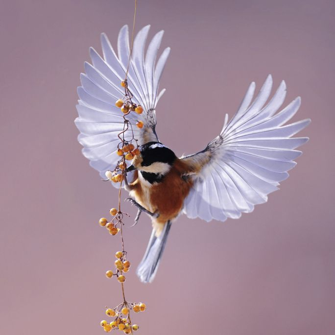 Wanddecoratie Bright Wings 020 74x74cm