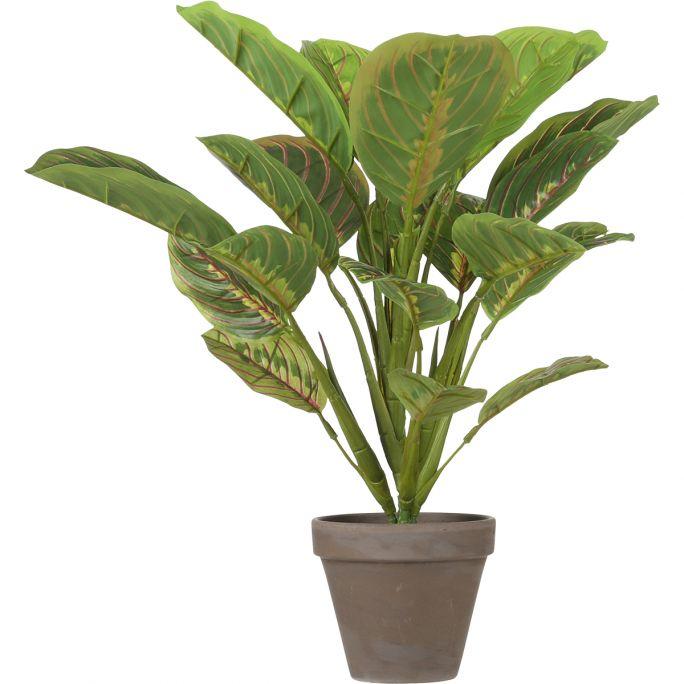Kunstplant Calathea 38cm hoog