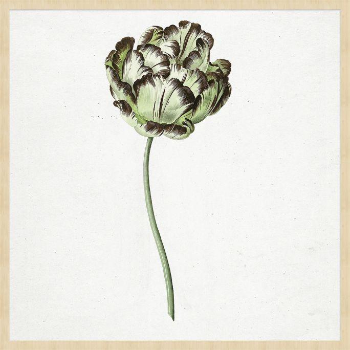 Wanddecoratie Botanical Stories 015 74x74cm