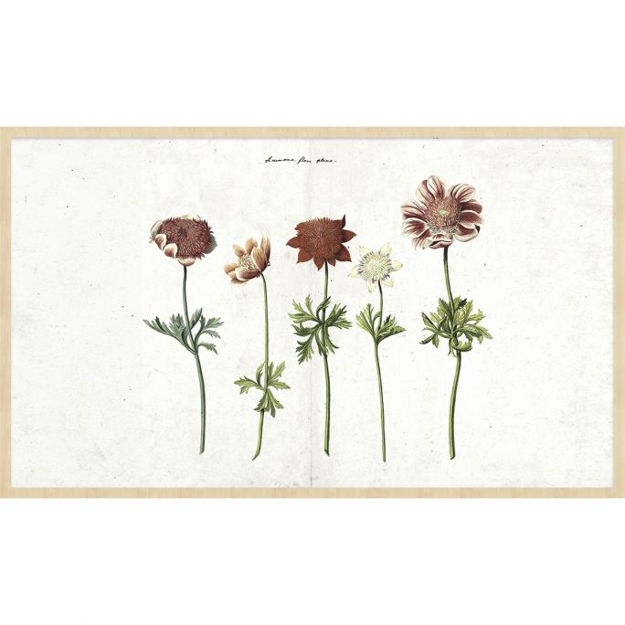 Wanddecoratie Botanical Stories 016 118x70cm