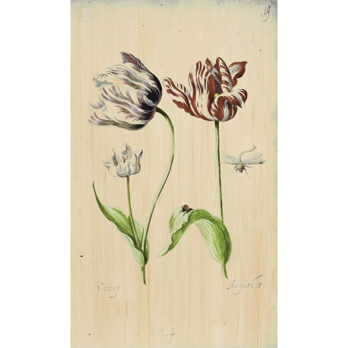 Wanddecoratie Botanical Stories 017 70x118cm