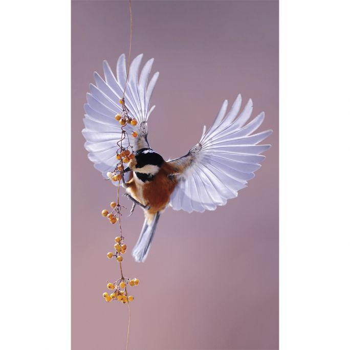 Wanddecoratie Bright Wings 020 70x118cm