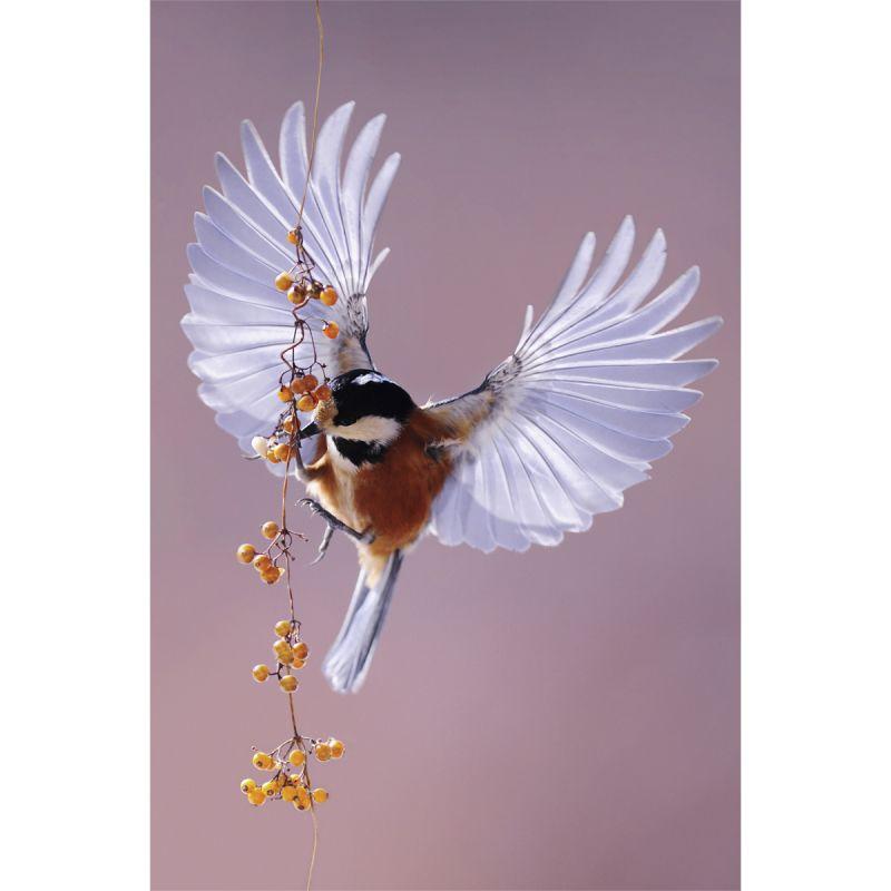 Wanddecoratie Bright Wings 020 98x148cm