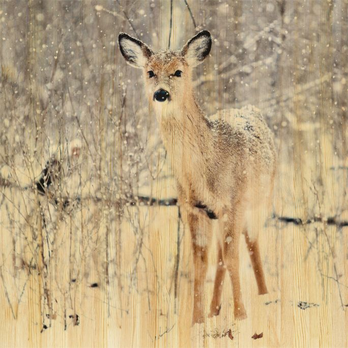 Wanddecoratie European Wildlife 007 74x74cm