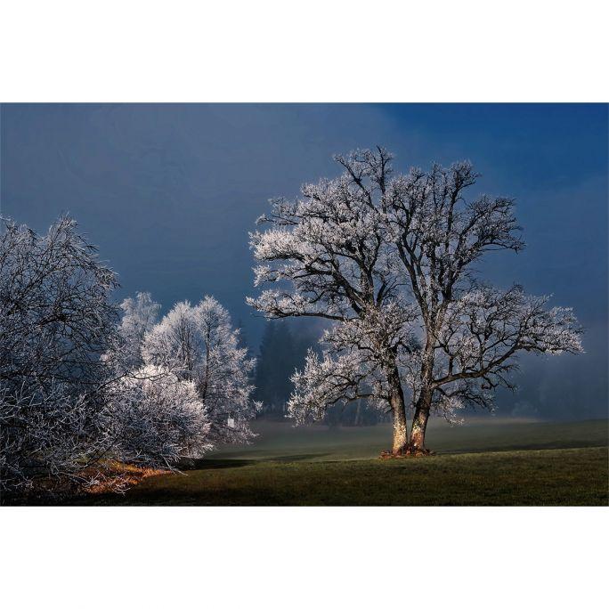 Wanddecoratie Winter Wonders 007 148x98cm