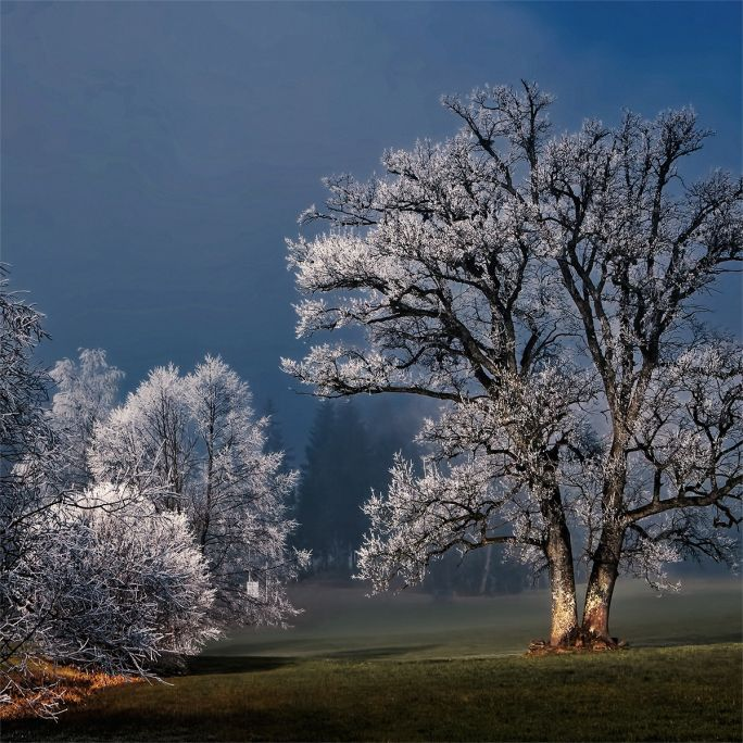 Wanddecoratie Winter Wonders 007 74x74cm