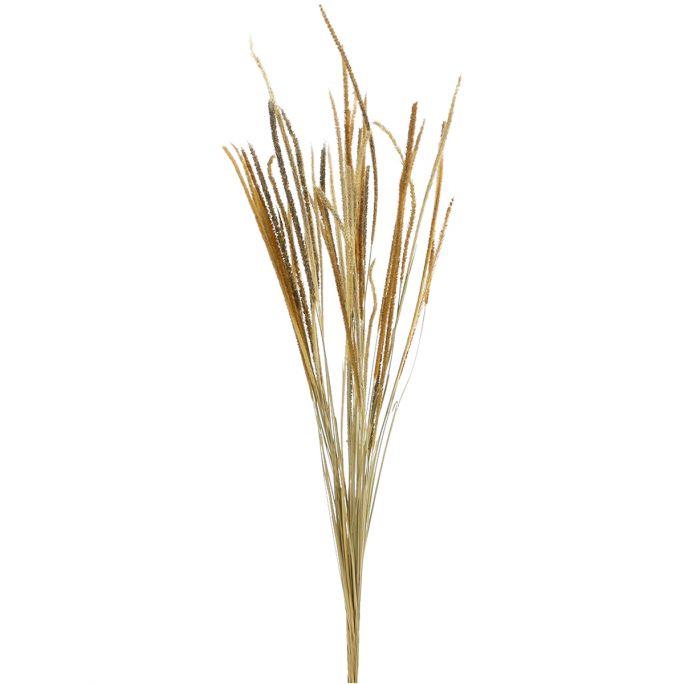 Droogbloemen Grass