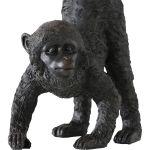 Monkey James zwart