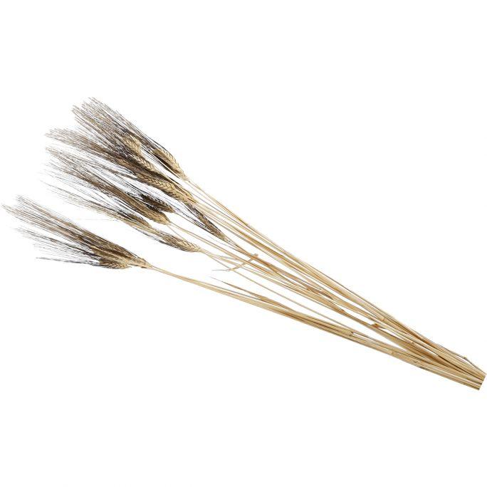 Droogbloem Wheat