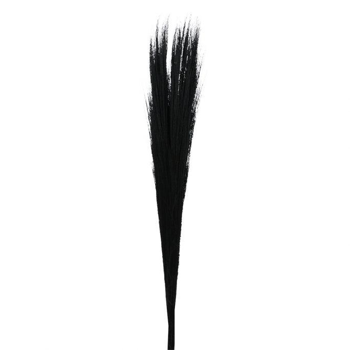 Droogbloem Buddy 75 cm zwart