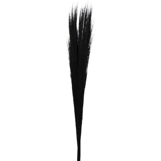 Droogbloem Buddy 110 cm zwart