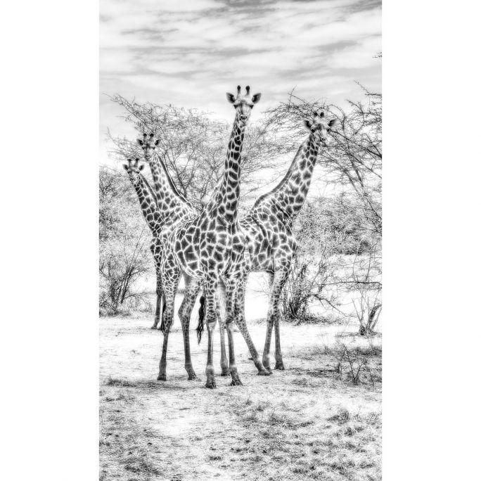 Wanddecoratie Wildlife 015 70x118cm