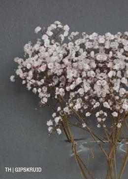 Trendhopper inspiratie droogbloemen gipskruid